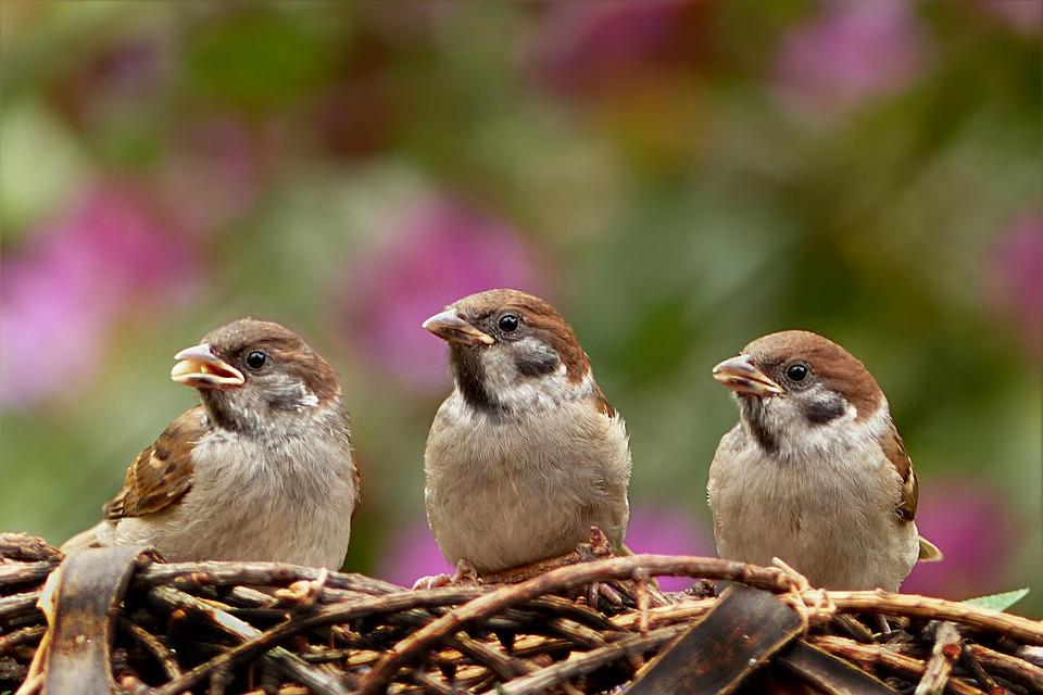 Birds on Campus