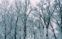 Eight Traditions For When You Want A Snow Day