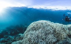 The Danger of Climate Change and Its Impact on Our Oceans