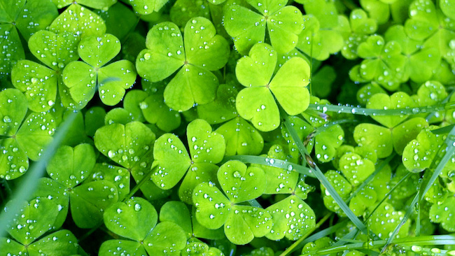 10 Things You Probably Didn't Know About Saint Patrick's Day